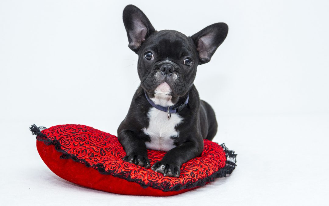 Kiwoko te ayuda a proteger a tu mascota del verano