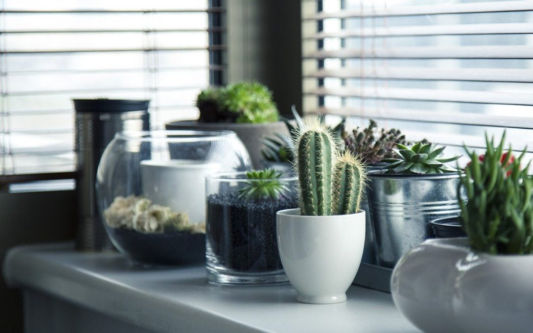 Plantas para nuestro hogar, ¿cómo podemos cuidarlas?