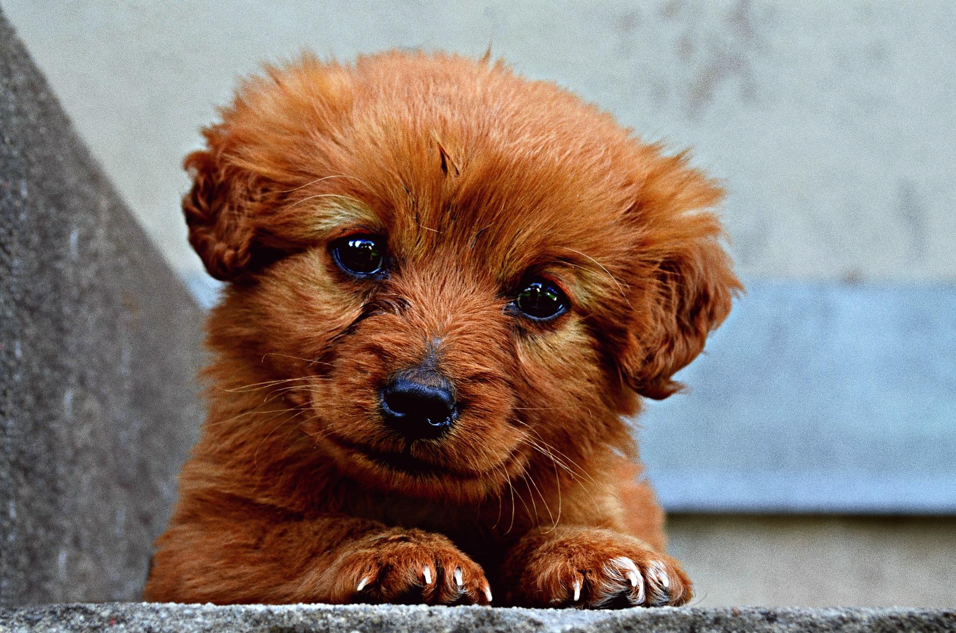 alimentación para cachorros - kiwoko libertad