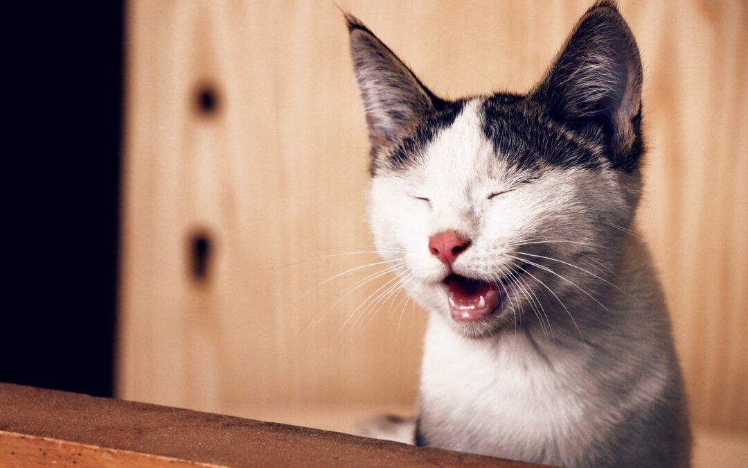 ¿Qué cantidad de comida le debemos dar a nuestro gato?