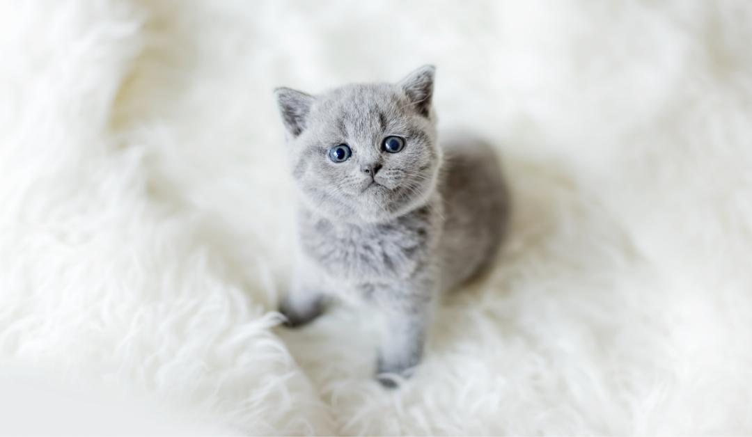 Un gatito en casa: cómo prepararte para su llegada
