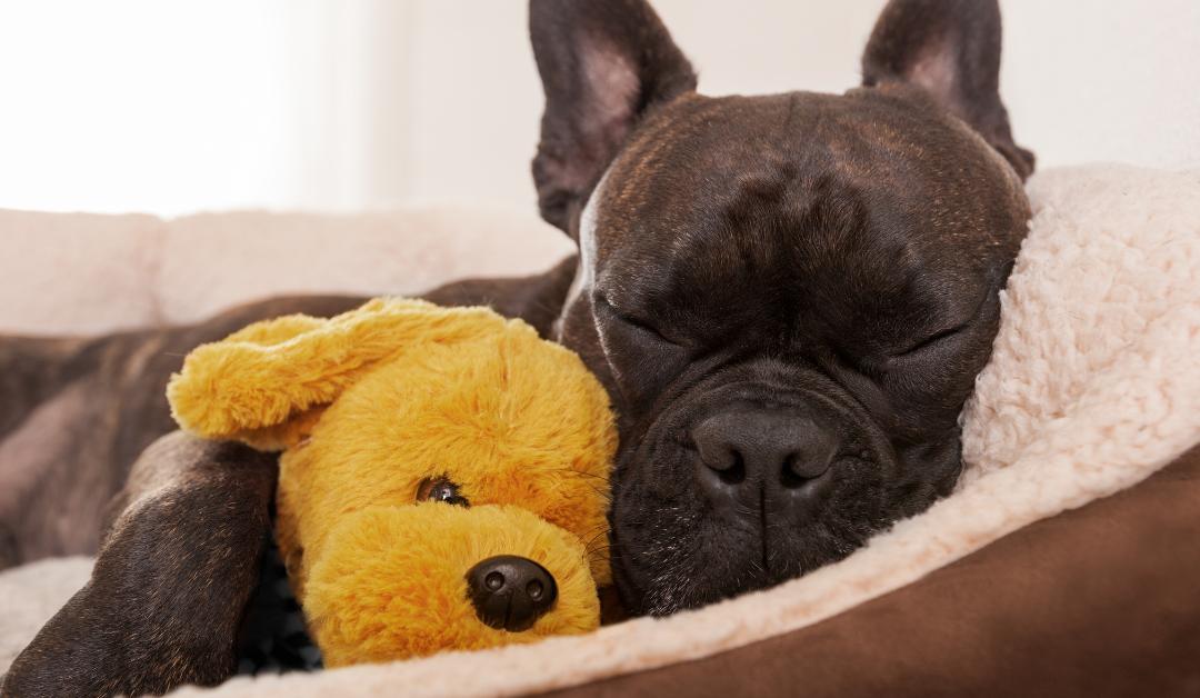 ¿Cómo elegimos la cama de nuestro perro? ¡Kiwoko nos da la solución!