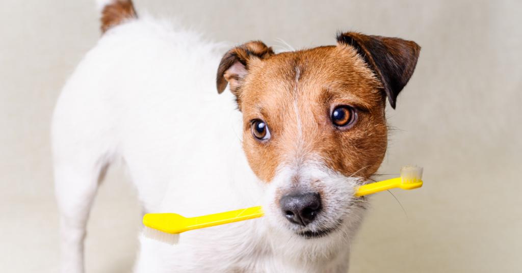 higiene bucal de los perros kiwoko centro comercial la libertad tenerife